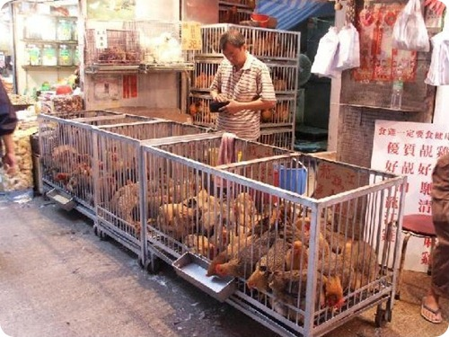 691843-Live_chicken_vendor_in_Public_Market_Hong_Kong